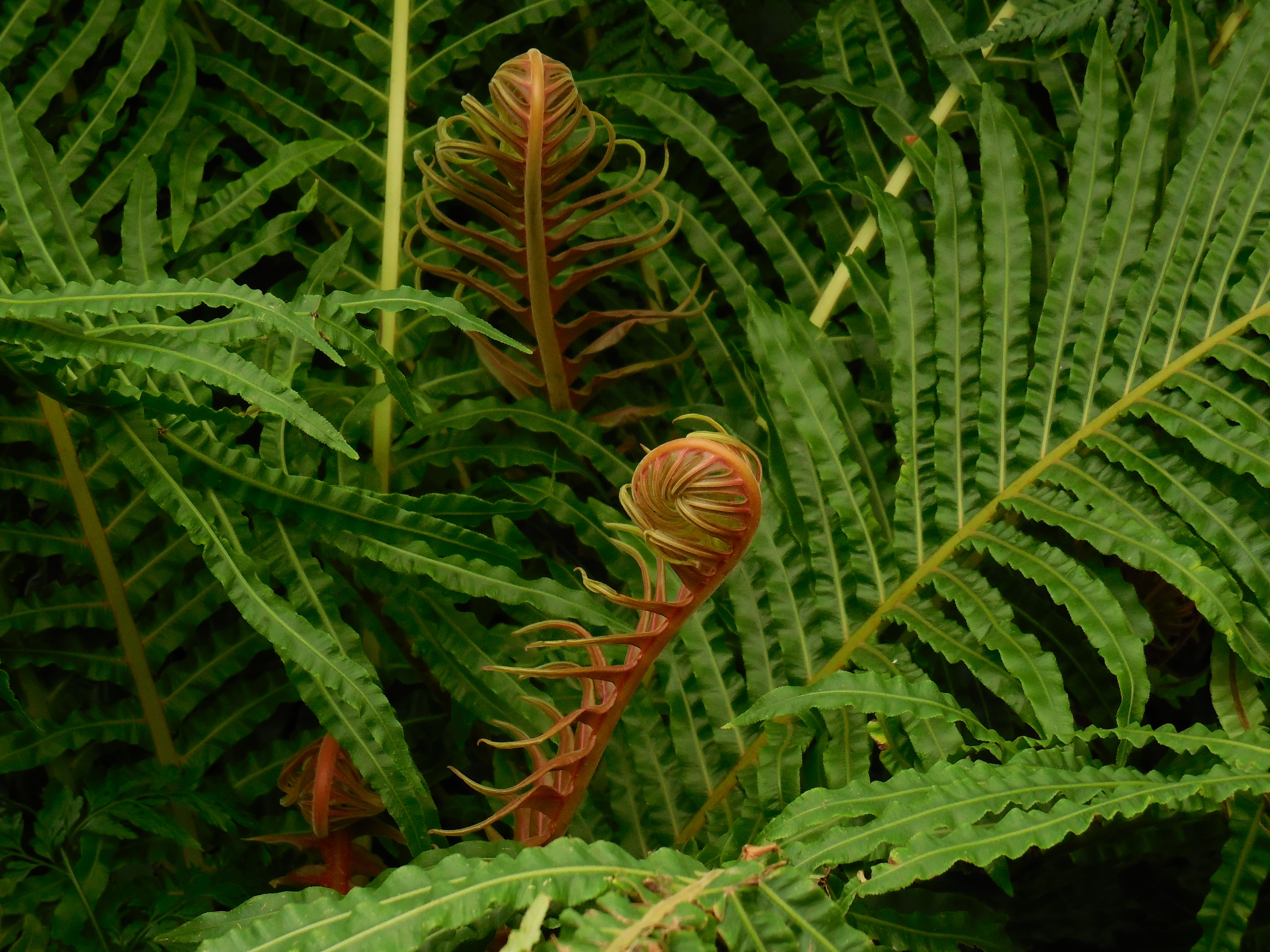 fronds-290848